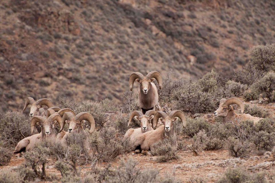 DesertBigHorn40.jpg