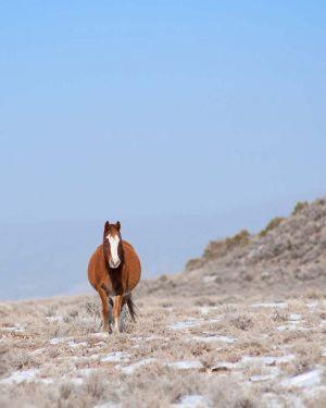 wildhorses1.jpg