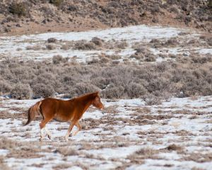 wildhorses2.jpg