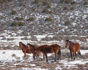 wildhorses3.jpg