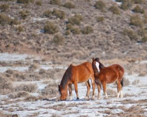 wildhorses4.jpg
