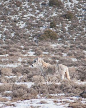 wildhorses5.jpg