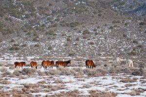 wildhorses6.jpg